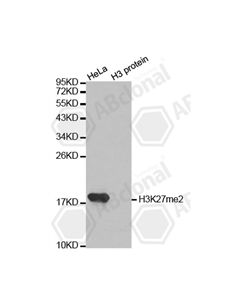 DiMethyl-Histone H3-K27 Polyclonal Antibody