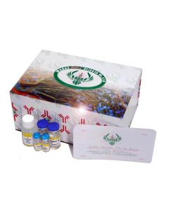 Human Advanced Glycosylation End Products ELISA Kit