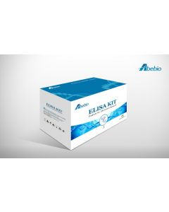 Human MAP kinase-activated protein kinase 2 (MAPKAPK2) ELISA Kit