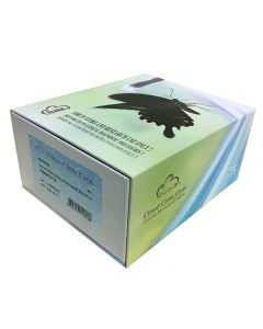 Rabbit Connective Tissue Growth Factor (CTGF) CLIA Kit